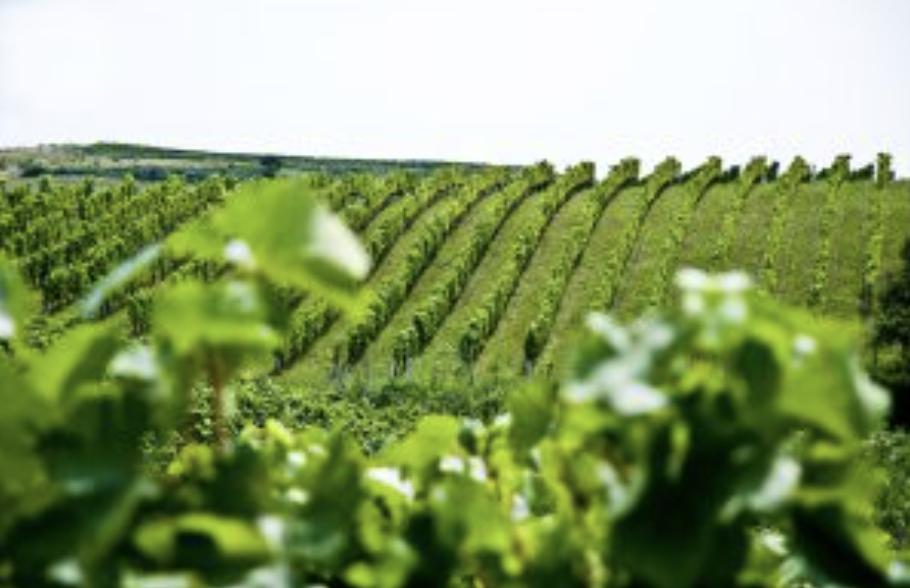 Gróf Buttler borok szőlőterület