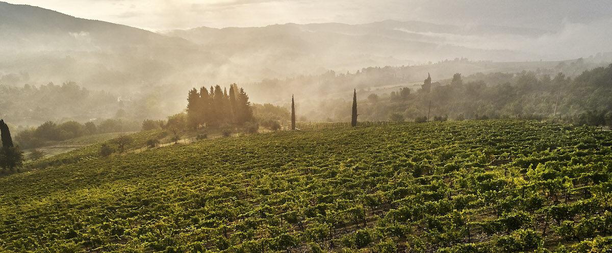 Toszkána, Chianti - Mindenki szerelme, gyönyörű szőlőültetvények