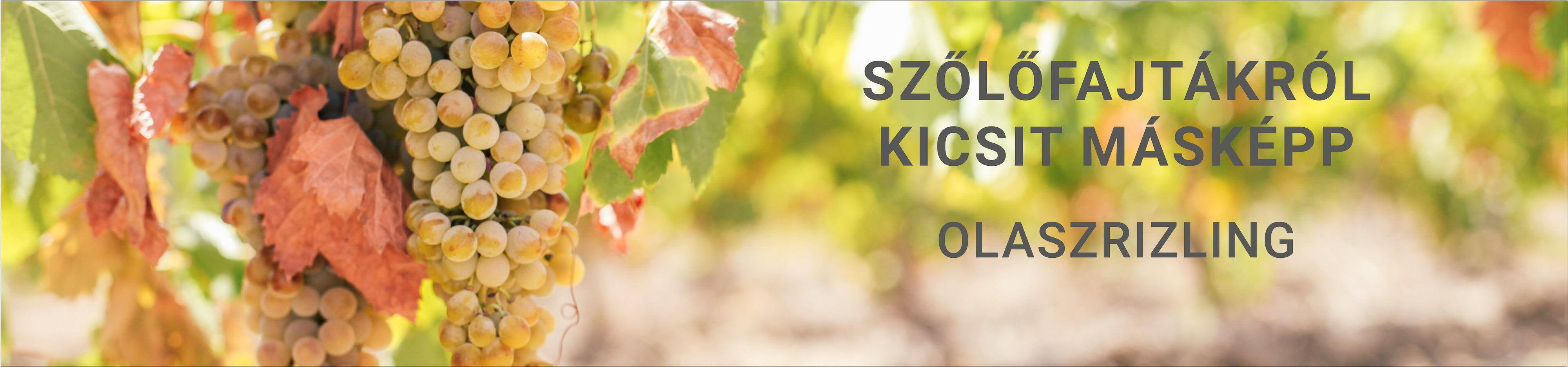 Olaszrizling szőlőfajta - Olaszrizling bor